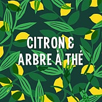 Citron Arbre a The